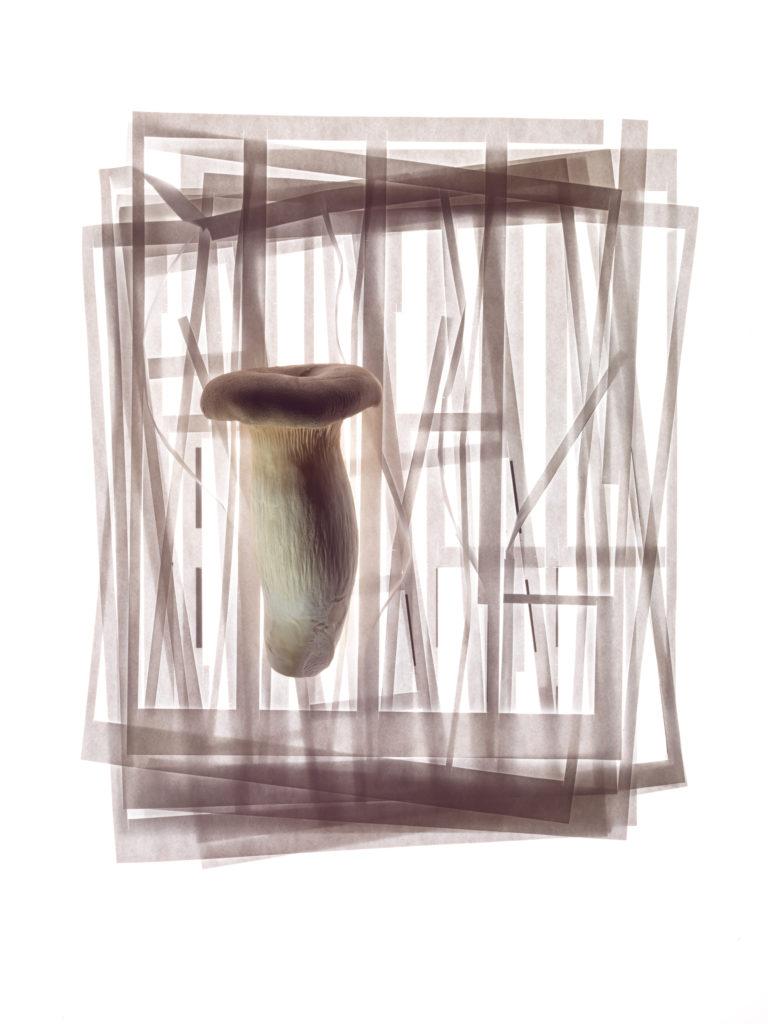 King Trumpet Mushroom Bibimbap
